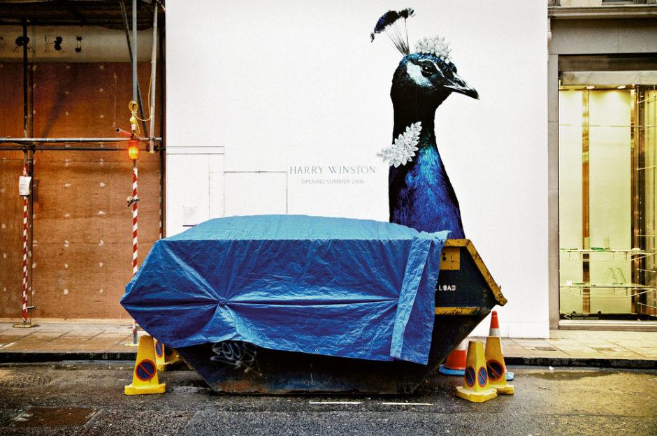 image iconique de matt stuart, composition au paon bleu