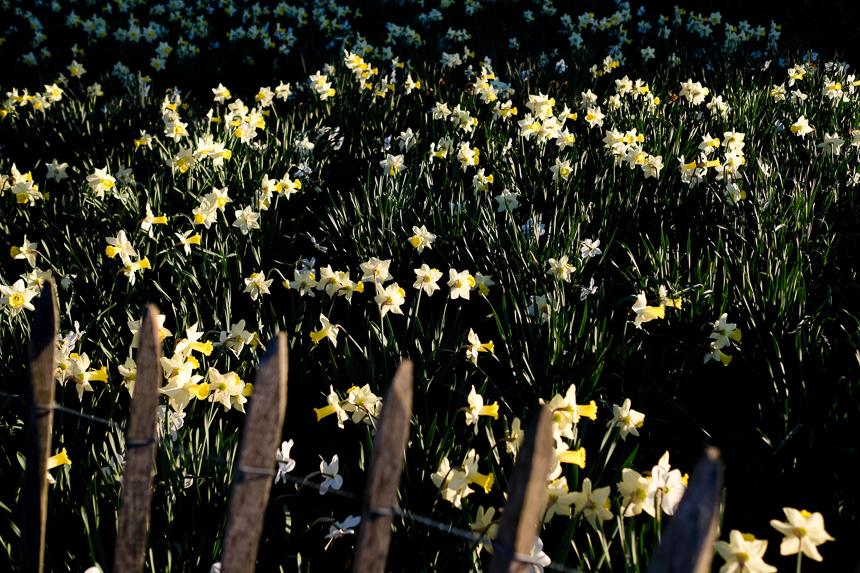 méditation et photographie dans les jardins de la tête d'or